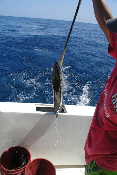 Catch a Barracuda in Destin Florida