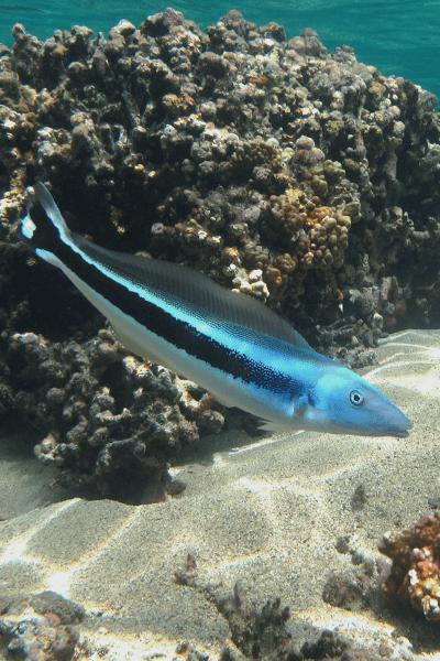 Catching Tilefish in Miami Florida
