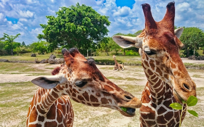 Family-Friendly Places and Activities in Miami, Florida